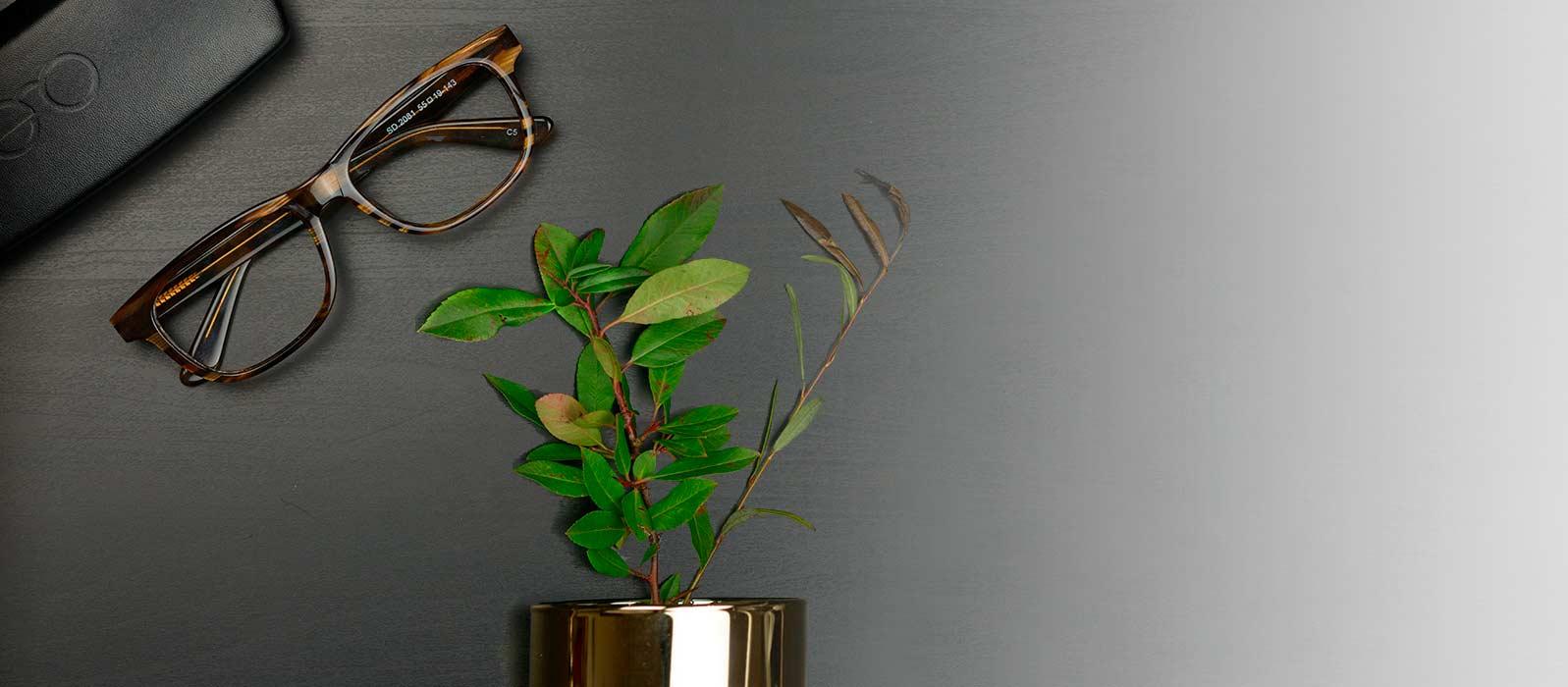 briller på et bord med sort duk og en grønn plante